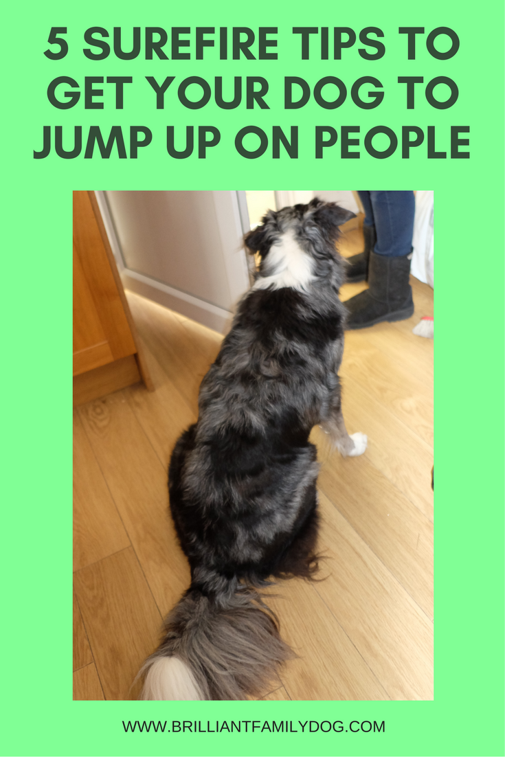 Dog training, new puppy, puppy training, dog behavior | 5 surefire TIPS to get your dog to jump up on people | FREE EMAIL COURSE | #newpuppy, #dogtraining, #puppytraining, #dogbehavior | www.brilliantfamilydog.com