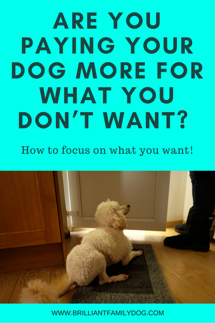 Are you paying your dog more what you don't want?