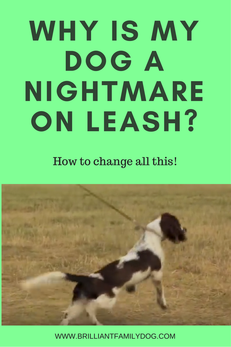 Reactive dog, aggressive dog, fearful dog |Why is my dog a nightmare on leash? | FREE EMAIL COURSE | #aggressivedog, #newrescuedog, #dogtraining | www.brilliantfamilydog.com