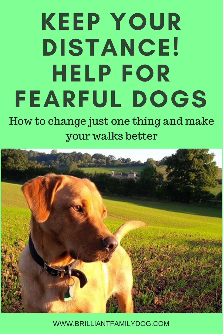 Reactive dog, aggressive dog, fearful dog | Learn how keeping your distance makes all the difference | FREE EMAIL COURSE | #aggressivedog, #newrescuedog, #dogtraining | www.brilliantfamilydog.com