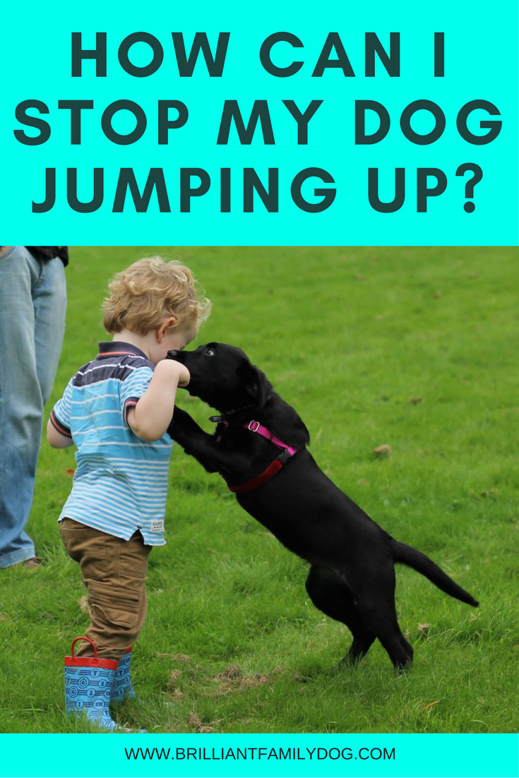How can I stop my dog jumping up?