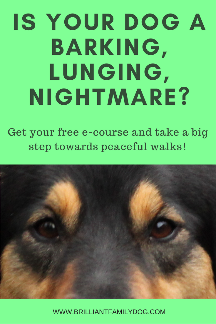 Why is my dog a barking, lunging nightmare?