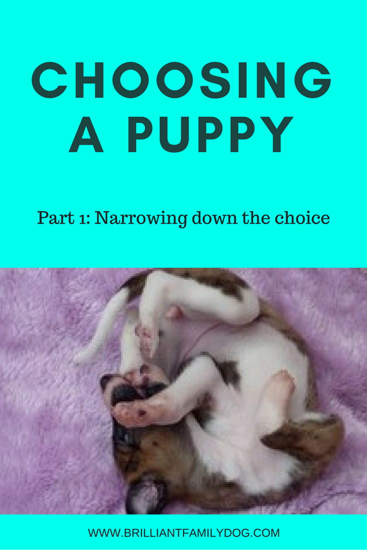 How to choose your puppy