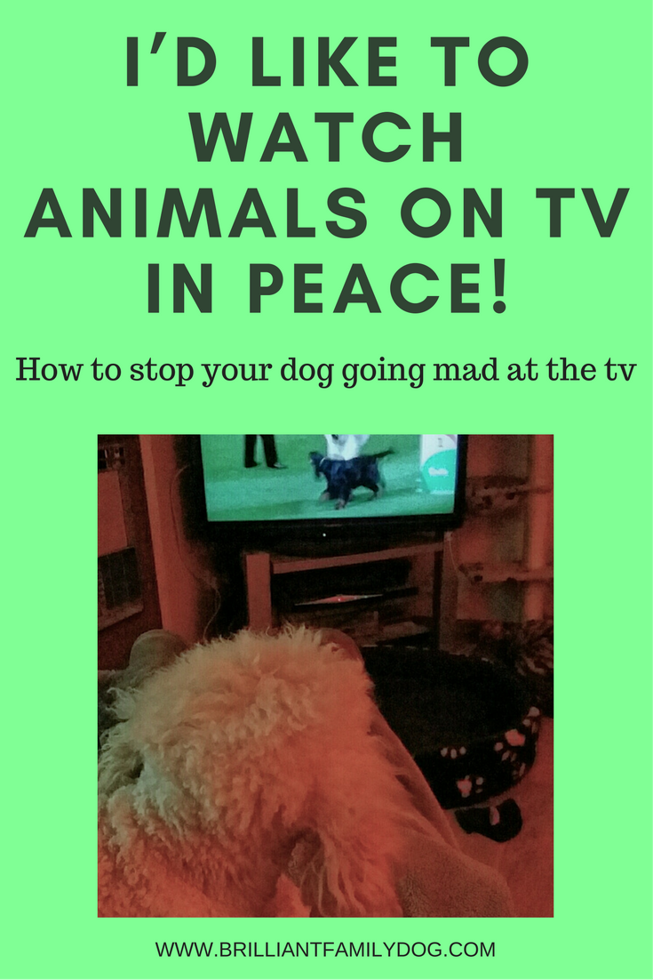 Now we can watch dogs on tv in peace