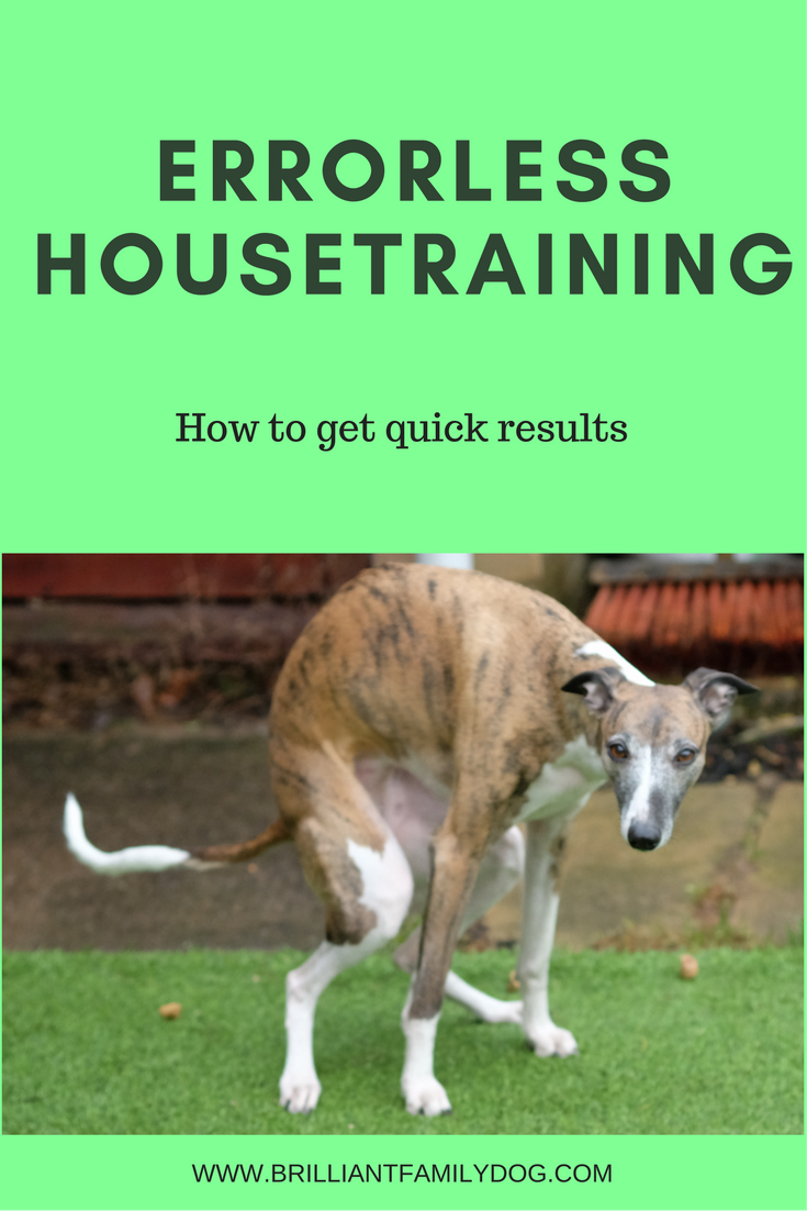 Housetraining your puppy the easy way