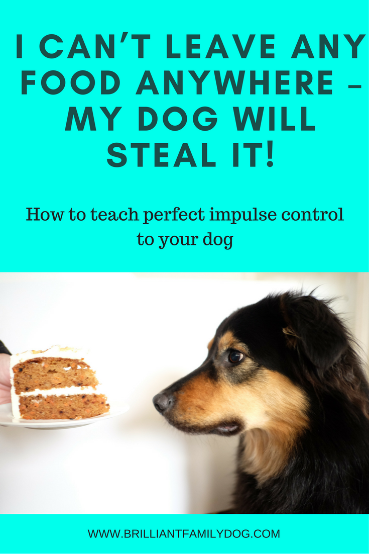 How to teach your dog to leave your food - free book!