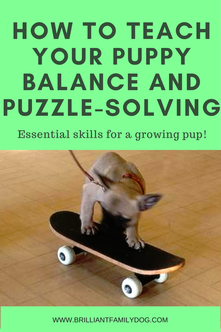How to teach your puppy balance and puzzle-solving