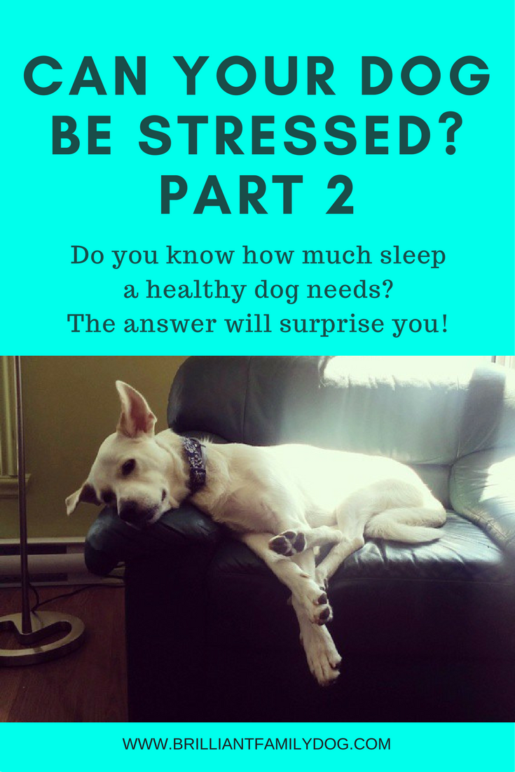Dog training, new puppy, puppy training, dog behavior | How much sleep does your dog need? - how to reduce stress | FREE EMAIL COURSE | #newpuppy, #dogtraining, #puppytraining, #dogbehavior | www.brilliantfamilydog.com