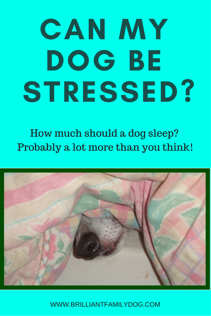 Can your dog be stressed? Part 2