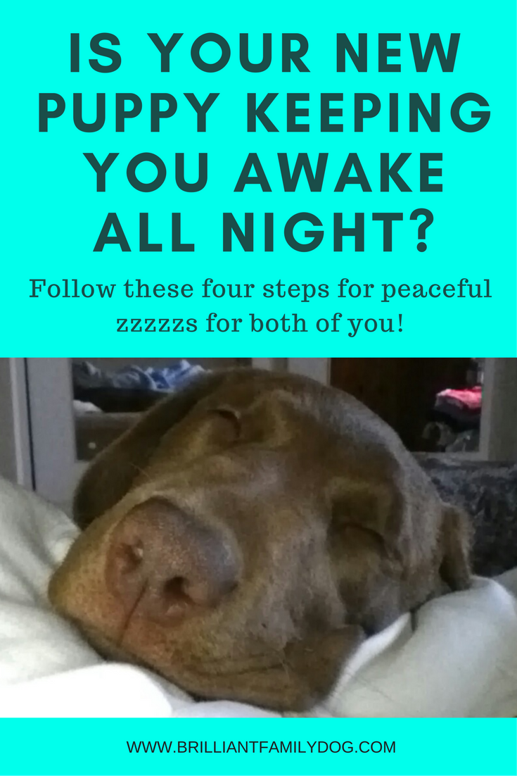 Is your new puppy keeping you awake all night?