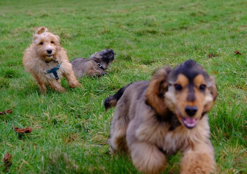 High-energy puppies!