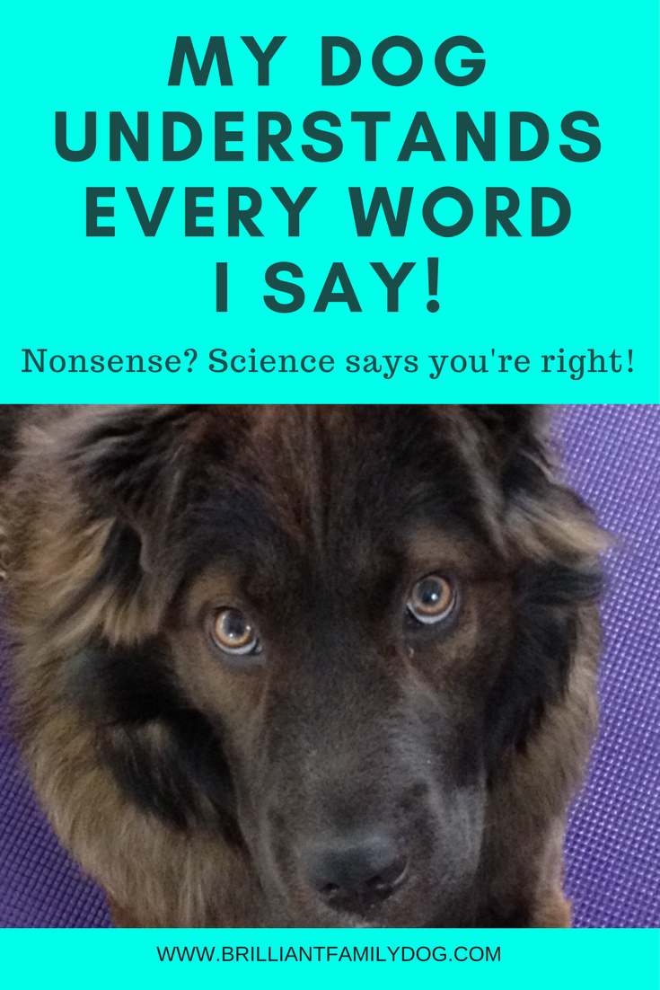 Dog training, new puppy, puppy training, dog behavior | Does your dog understand every word you say? Science says YES! | FREE EMAIL COURSE | #newpuppy, #dogtraining, #puppytraining, #dogbehavior | www.brilliantfamilydog.com