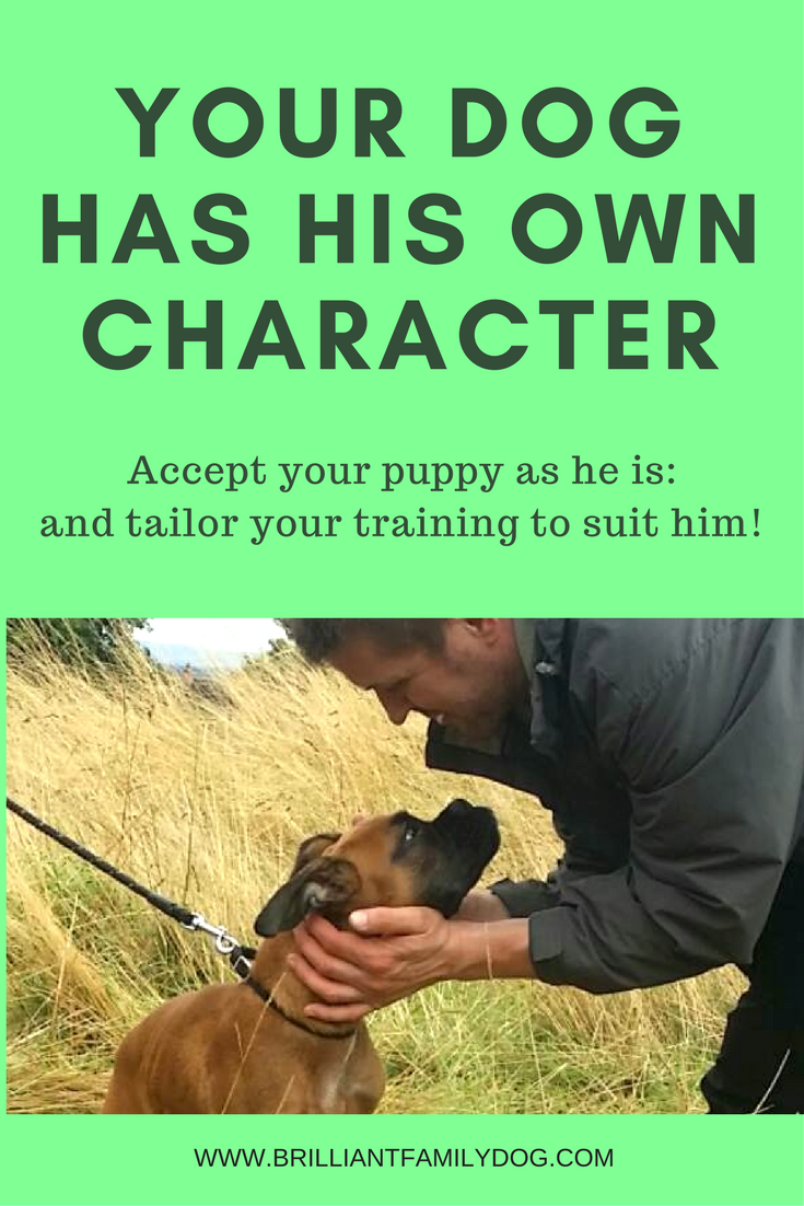 Your dog has his own character