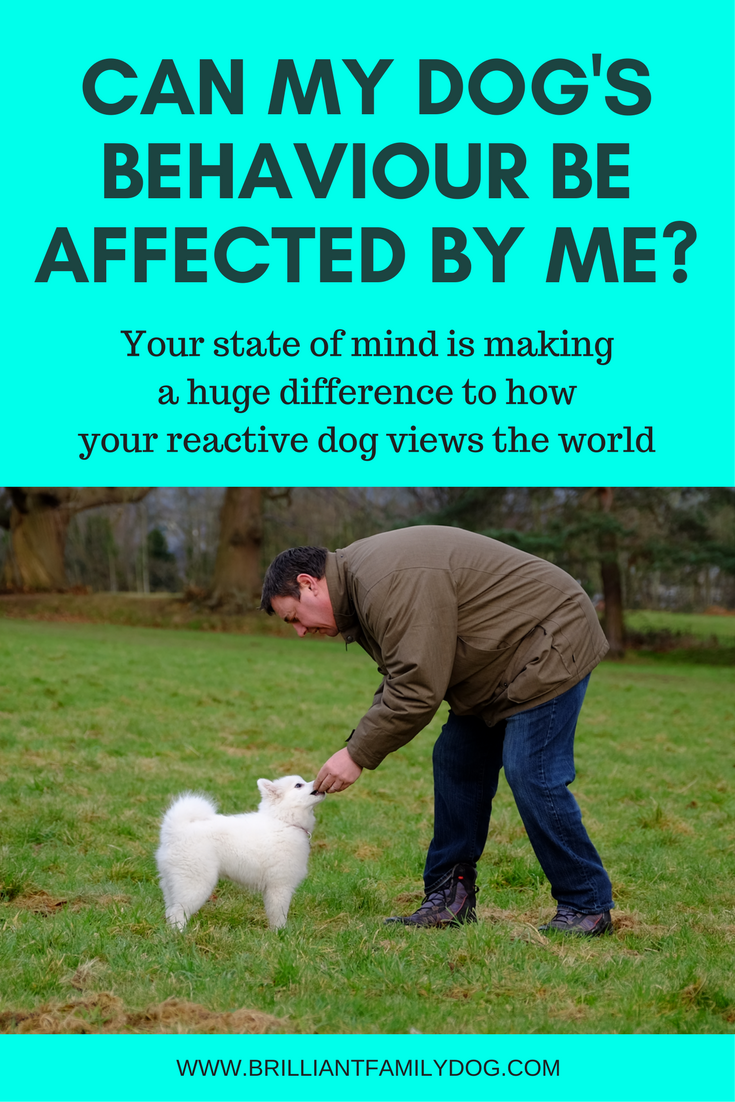 Reactive dog, aggressive dog, fearful dog, dog behavior | Can I be making my dog's behaviour worse? | FREE EMAIL COURSE | #aggressivedog, #reactivedog, #dogtraining, #growlydog | www.brilliantfamilydog.com