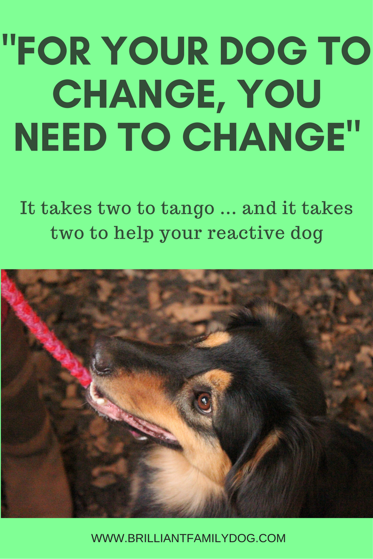 For your dog to change you need to change