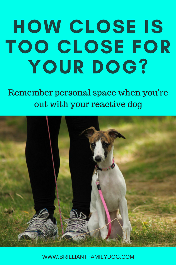 Reactive dog, aggressive dog, fearful dog, dog behavior | Remember personal space with your reactive dog | FREE EMAIL COURSE | #aggressivedog, #reactivedog, #dogtraining, #growlydog | www.brilliantfamilydog.com