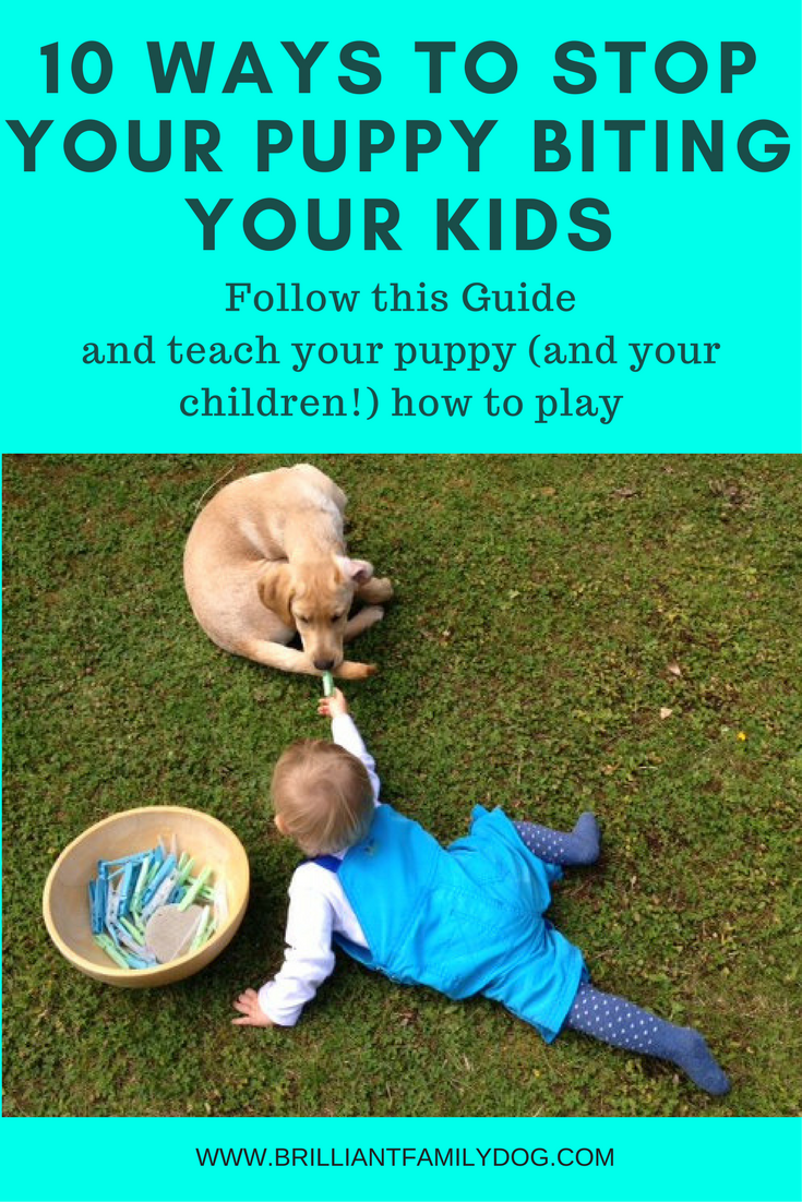 10 Ways To Stop Puppy Biting Brilliant Family Dog