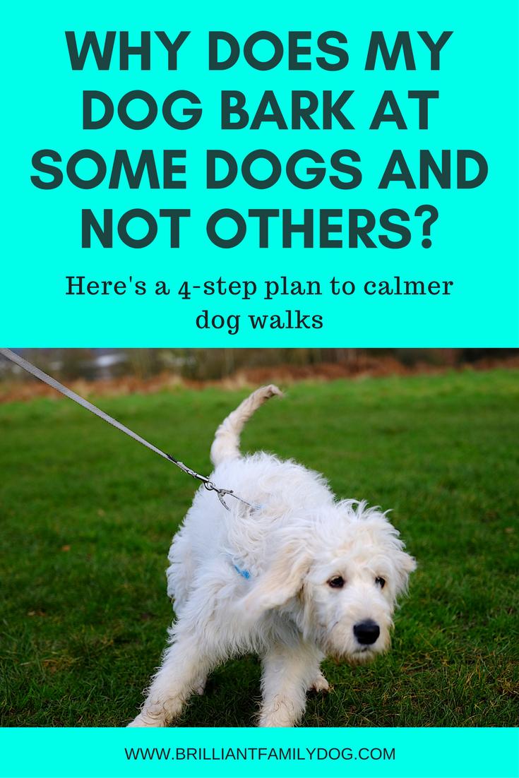 Reactive dog, aggressive dog, fearful dog, dog behavior   Why does my dog bark at some dogs and not others?   FREE EMAIL COURSE   #aggressivedog, #reactivedog, #dogtraining, #growlydog   www.brilliantfamilydog.com