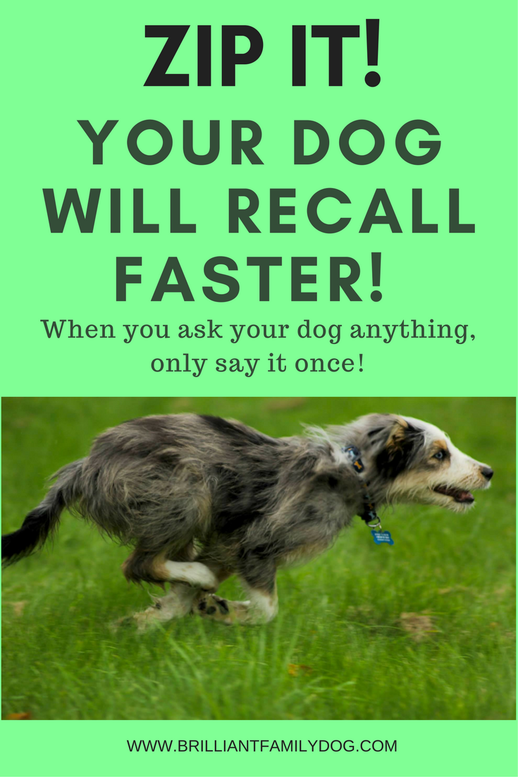 Dog training, new puppy, puppy training, dog behavior | Get a sparkling fast recall from your dog! | FREE GUIDE | #newpuppy, #dogtraining, #puppytraining, #dogbehavior | www.brilliantfamilydog.com