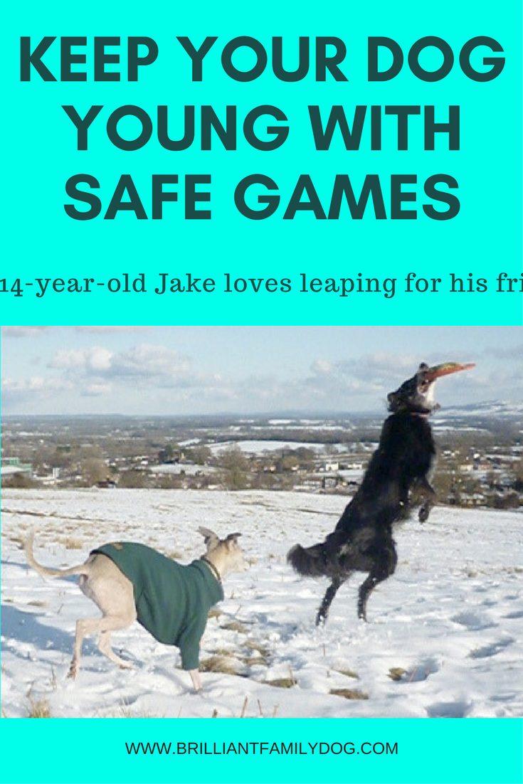 Keep your dog young with safe games