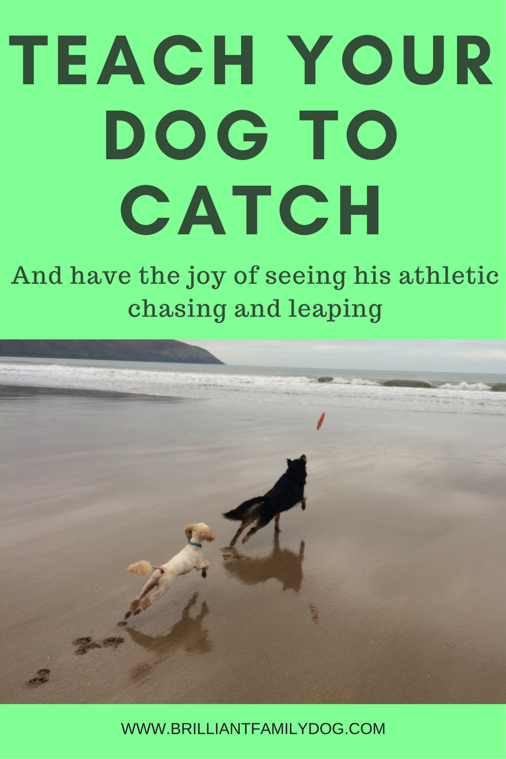 Teach your dog how to catch