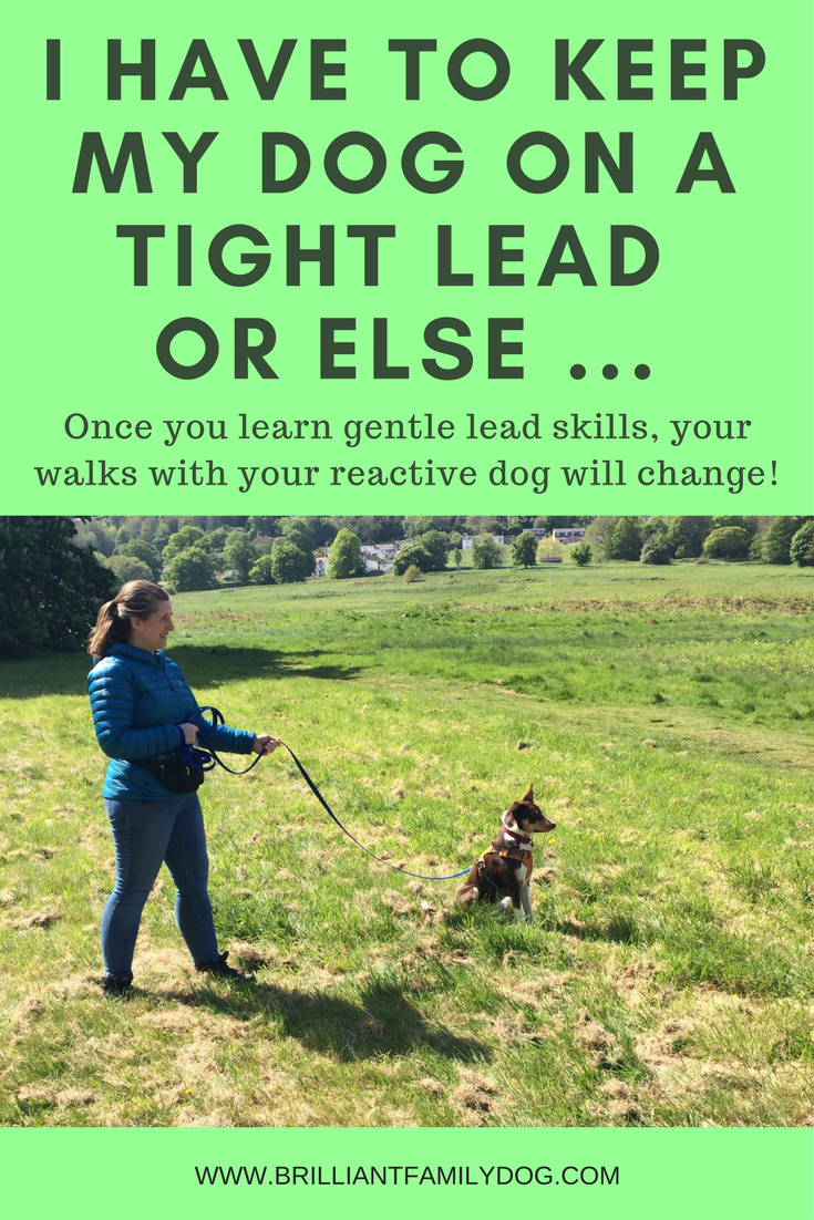 Reactive dog, aggressive dog, fearful dog, dog behavior | How you handle the leash can make a huge difference to your dog's reactions | FREE EMAIL COURSE | #aggressivedog, #reactivedog, #dogtraining, #growlydog | www.brilliantfamilydog.com