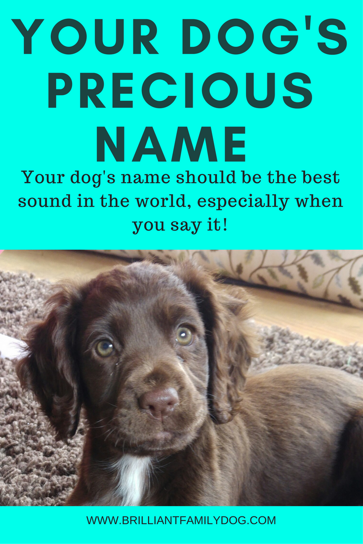 Dog training, new puppy, puppy training, dog behavior | Your dog's name should be the most precious sound in the world - don't abuse it! | FREE EMAIL COURSE | #newpuppy, #dogtraining, #puppytraining, #dogbehavior | www.brilliantfamilydog.com