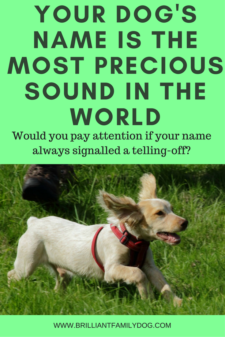 Your dog's name is the most precious sound in the world