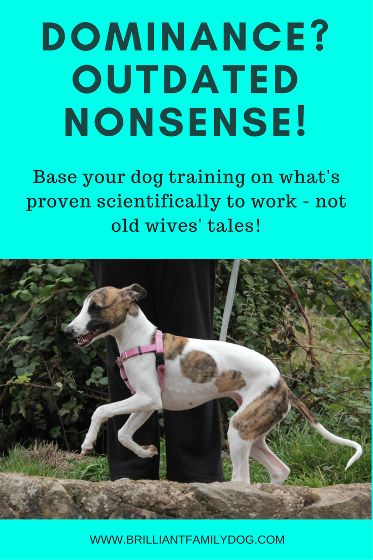 Reactive dog, aggressive dog, fearful dog, dog behavior | Dominance? Dog wants to rule you? Nonsense! That's not how dogs think | FREE EMAIL COURSE | #aggressivedog, #reactivedog, #dogtraining, #growlydog | www.brilliantfamilydog.com