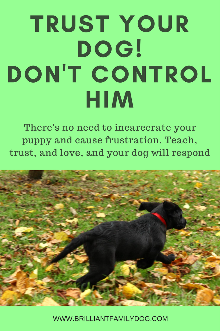 Dog training, new puppy, puppy training, dog behavior | Learn to trust your new puppy while you teach him - freedom for both of you! | FREE EMAIL COURSE | #newpuppy, #dogtraining, #puppytraining, #dogbehavior | www.brilliantfamilydog.com