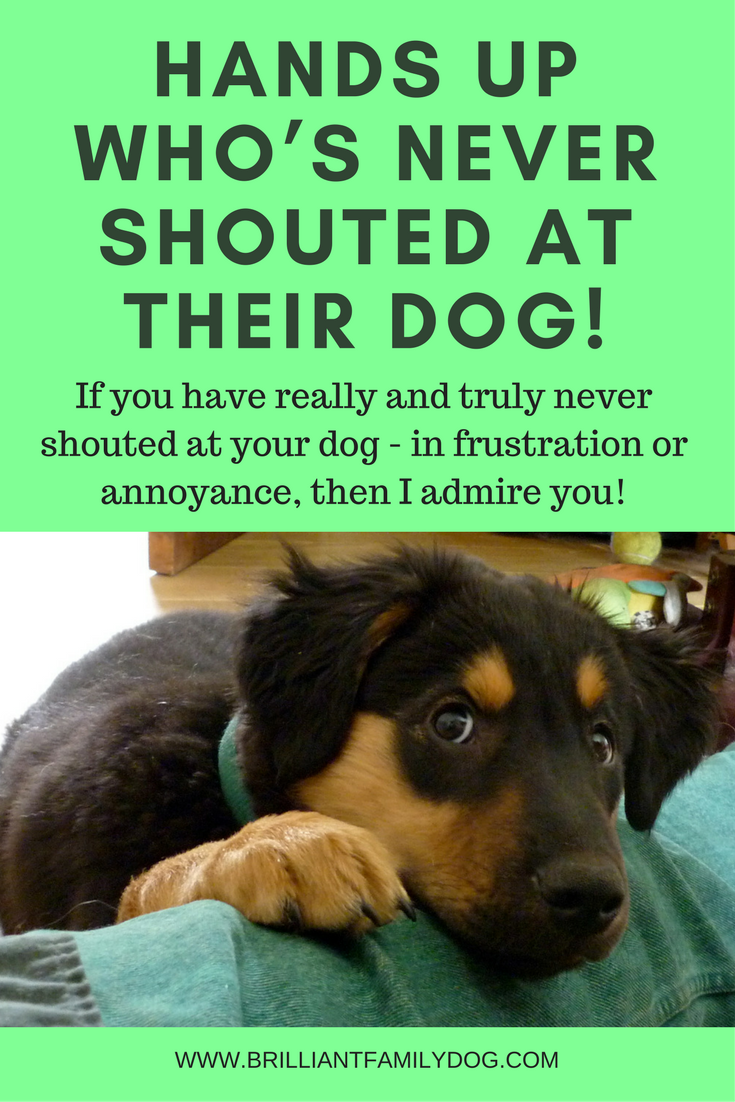 Dog training, new puppy, puppy training | Do you get frustrated with your dog by times? Congratulations - you're normal! | FREE EMAIL COURSE | #newpuppy, #dogtraining, #newrescuedog, #puppytraining, #dogbehavior | www.brilliantfamilydog.com