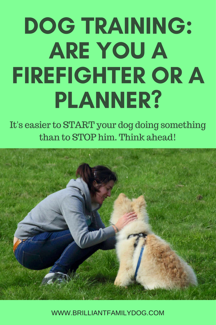 Dog training, new puppy, puppy training | Dog Training: are you a firefighter or a planner? It's easier to teach your dog first then treat problems retrospectively | FREE EMAIL COURSE | #newpuppy, #dogtraining, #newrescuedog, #puppytraining, #dogbehavior | www.brilliantfamilydog.com