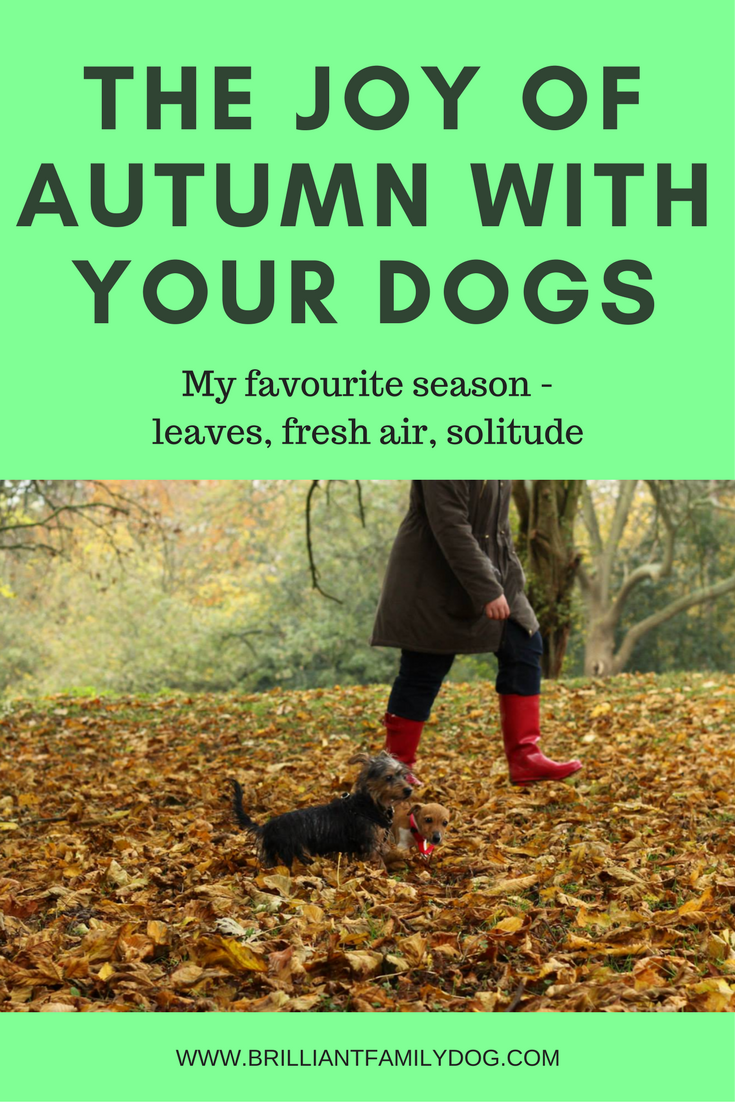Dog training, new puppy, puppy training | The joy of Autumn with your dogs | FREE EMAIL COURSE | #newpuppy, #dogtraining, #newrescuedog, #puppytraining, #dogbehavior | www.brilliantfamilydog.com