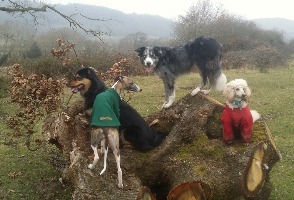 My four dogs on fallen tree.png