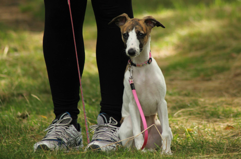 A soft long lead is essential for sympathetic dog training