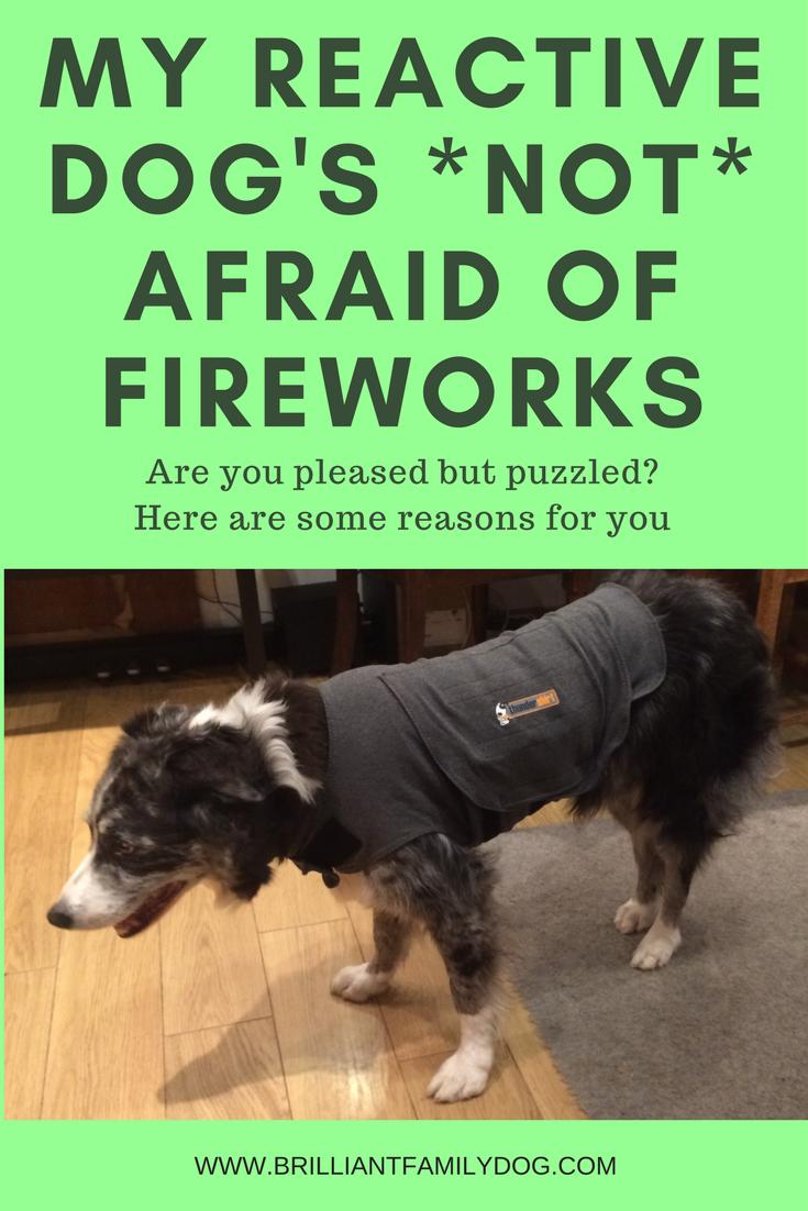 My reactive dog's *not* afraid of fireworks: Why?  |www.brilliantfamilydog.com/blog/my-dogs-not-afraid-of-fireworks-but-why