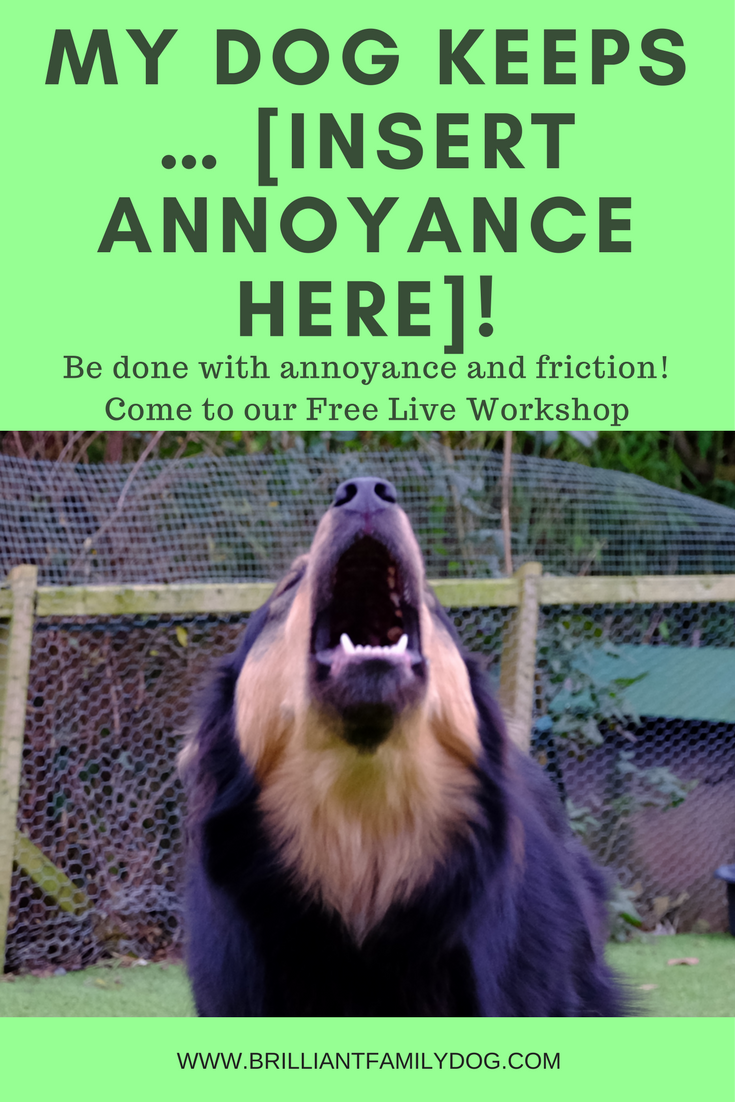 Dog training, new puppy, puppy training | My dog keeps ... [insert annoyance here]! How to stop your dog doing stuff you don't like | FREE EMAIL COURSE | #newpuppy, #dogtraining, #newrescuedog, #puppytraining, #dogbehavior | www.brilliantfamilydog.com