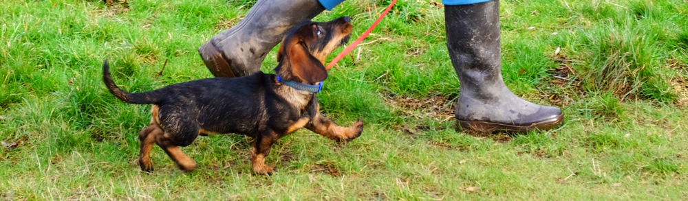 Free Online Dog Training Workshop | www.brilliantfamilydog.com/5-day-workshop