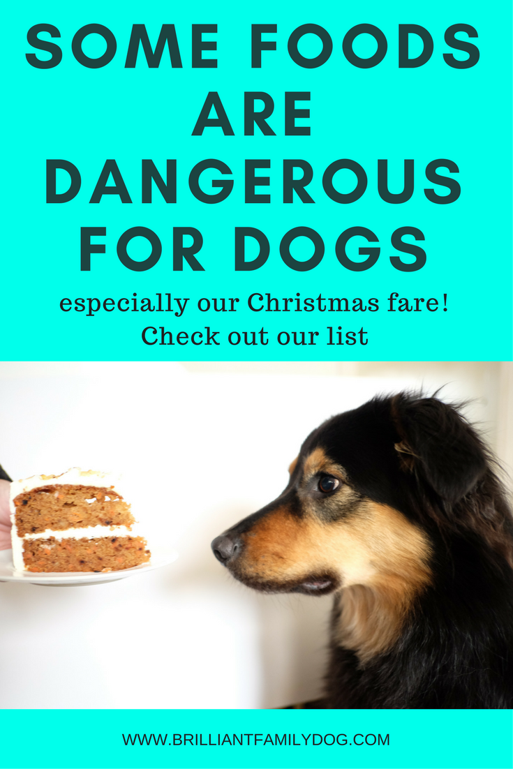 Dog training, new puppy, puppy training, Christmas, dog health | Some foods are dangerous for dogs | CLICK FOR THE LIST | #newpuppy, #dogtraining, #newrescuedog, #doghealth, #dogbehavior | www.brilliantfamilydog.com