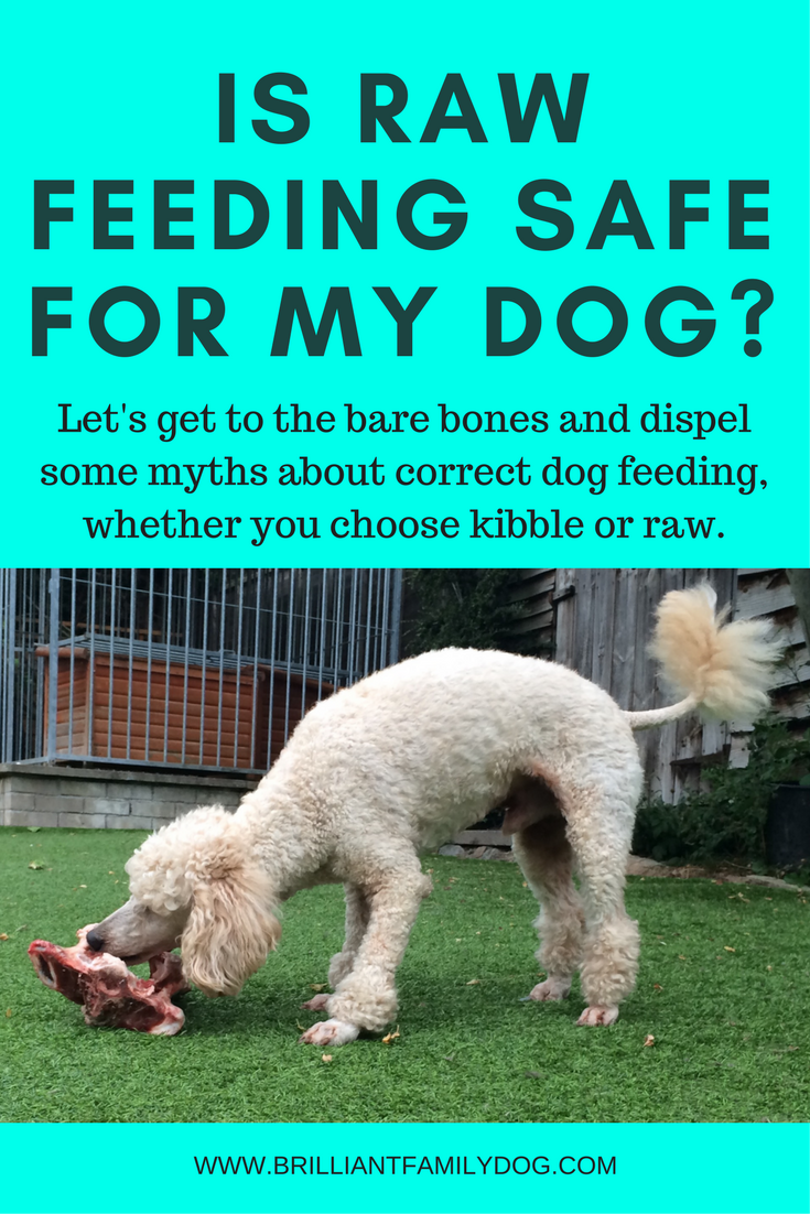 Dog behavior, dog feeding, dog diet, dog health | Is raw feeding safe for my dog? Let's get to the Bare Bones! |  #doghealth, #dogbehavior, #rawfeedingfordogs | www.brilliantfamilydog.com