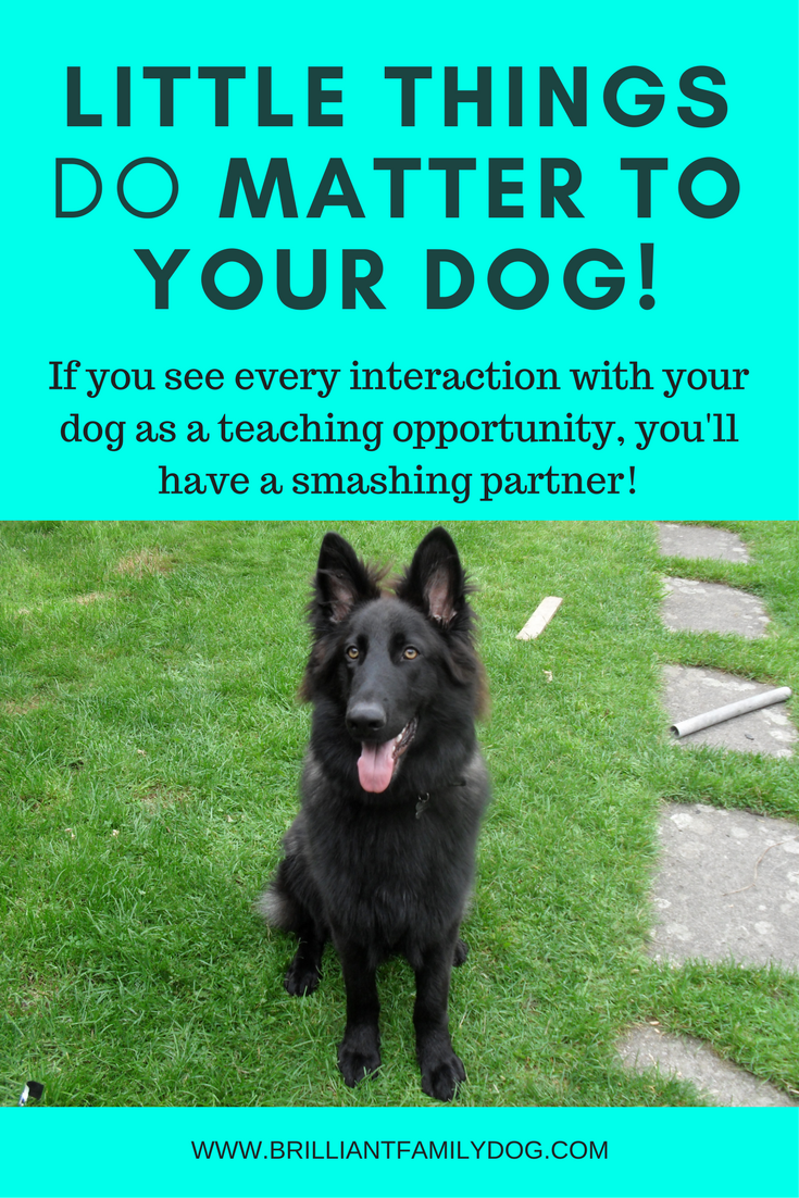 Dog training, new puppy, puppy training, how dogs learn | Little things do matter in dog training - get the small things right and your dog will get it! | FREE EMAIL COURSE | #newpuppy, #dogtraining, #newrescuedog, #puppytraining, #dogbehavior | www.brilliantfamilydog.com