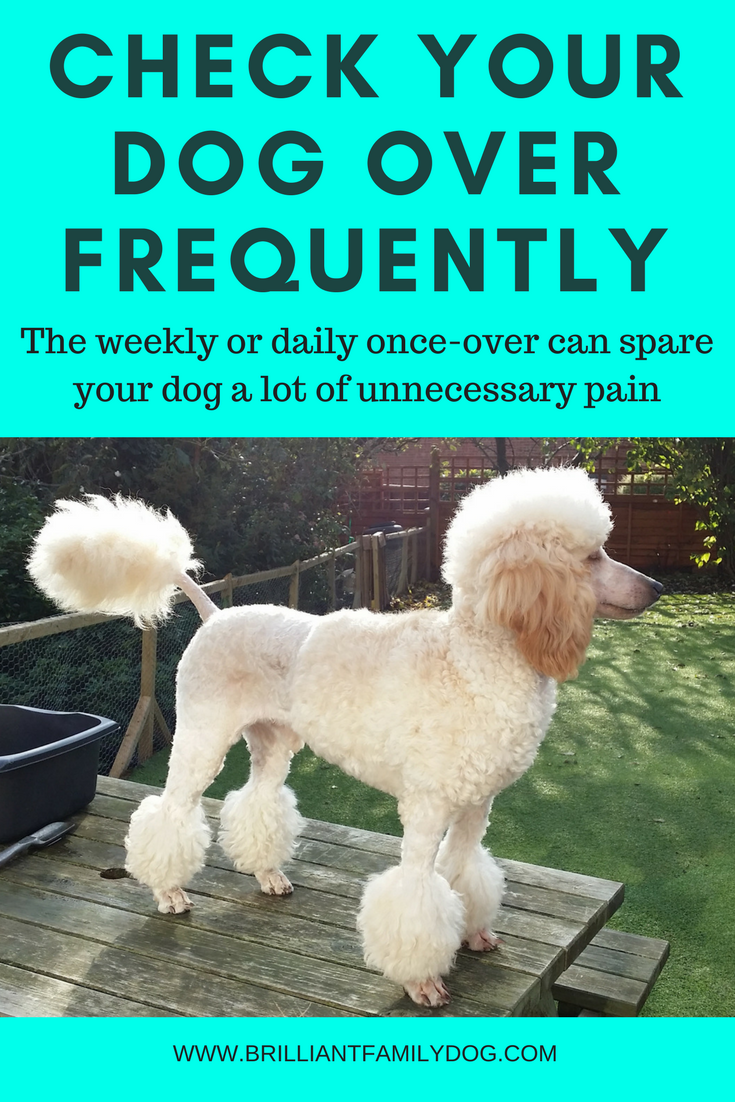 Fluffy puppy, long-haired dog, dog grooming, dog health | The weekly once-over can save you a lot of vet's bills! | FREE GUIDE | #hairydog, #doggrooming, #activedog | www.brilliantfamilydog.com