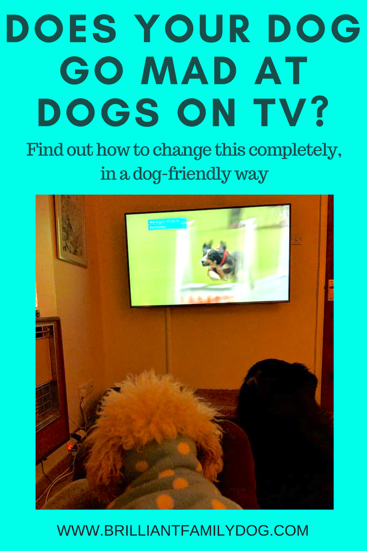 Yes, you and your dog can now watch animals on tv