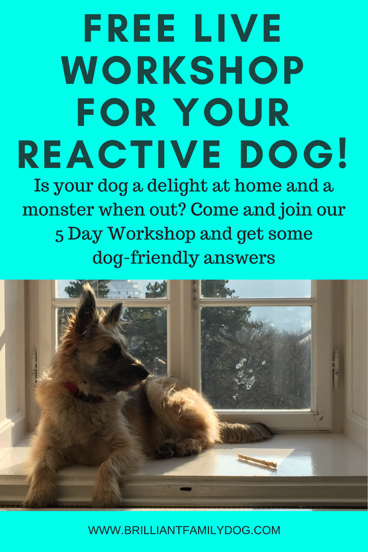 Reactive dog, dog afraid of tv, aggressive dog, fearful dog, dog behavior | How to enjoy watching animal programs on tv without your dog going ballistic! | FREE LIVE WORKSHOP | #aggressivedog, #reactivedog, #dogtraining, #growlydog, #fearfuldog | www.brilliantfamilydog.com