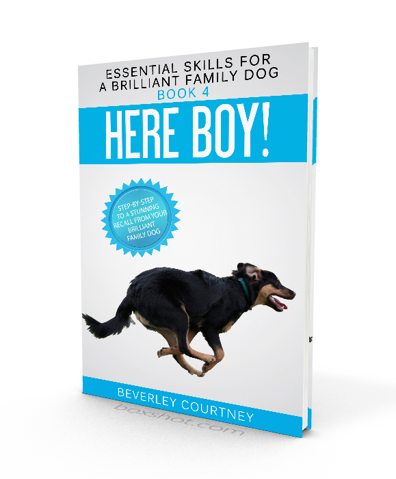 Here Boy! Step-by-step to a Stunning Recall from your Brilliant Family Dog | Dog training, new puppy, puppy training, dog recall training | #newpuppy, #dogtraining, #newrescuedog, #puppytraining, #dogbehavior | www.brilliantfamilydog.com