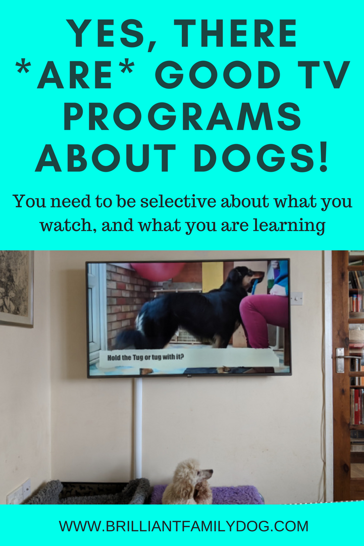 A problem dog learns the same way as any other dog. Be careful what you watch on tv so you feed your mind and your dog with the right ideas! The relationship will blossom and life will improve | FREE EMAIL COURSE | Reactive dog, problem dog, fearful dog, dog behavior | #problemdog, #reactivedog, #dogtraining, #growlydog | www.brilliantfamilydog.com