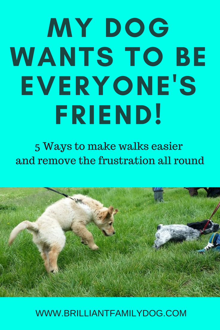 My Dog wants to be everyone's friend! 5 ways to reduce frustration on walks | FREE EMAIL COURSE | Reactive dog, problem dog, fearful dog, dog behavior | #dogtraining, #reactivedog, #dogtraining, #growlydog | www.brilliantfamilydog.com