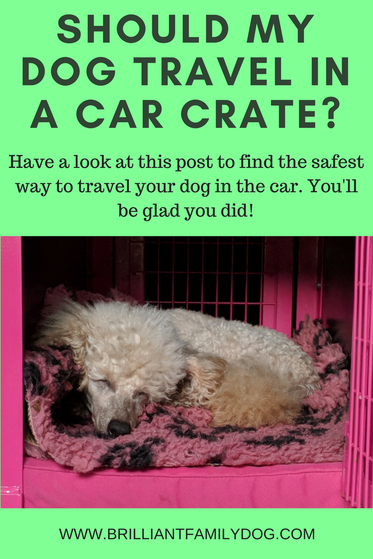 How can I make sure my dog is safe in the car?  Read the post to find out what's best, and why! | FREE EMAIL COURSE | Dog car travel, puppy car travel, dog behavior | #dogtraining, #newpuppy, #newrescuedog, #puppytraining, #dogbehavior | www.brilliantfamilydog.comld my dog travel in a car crate.png