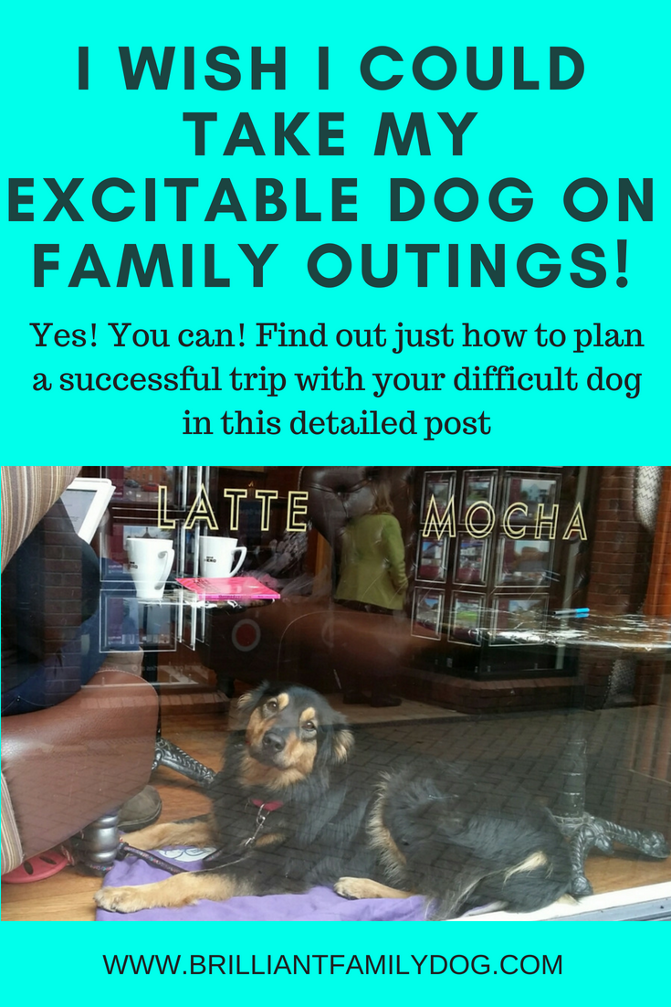 Do you long to take your tricky dog on family outings? You can! Follow the suggestions here and you can make it work, and really enjoy your family dog | FREE EMAIL COURSE | Reactive dog, problem dog, fearful dog, dog behavior | #problemdog, #reactivedog, #dogtraining, #growlydog | www.brilliantfamilydog.com