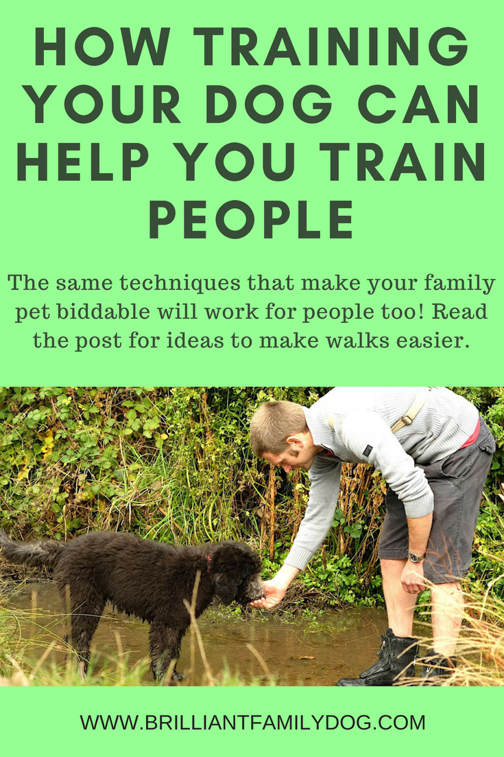 How can you protect your dog from well-meaning people who want to pet him? Here are some easy dog training techniques to kindly control your dog and train your visitor! FREE VIDEO WORKSHOP | #shydog, #dogtraining, #newrescuedog, #puppytraining, #dogbehavior | www.brilliantfamilydog.com